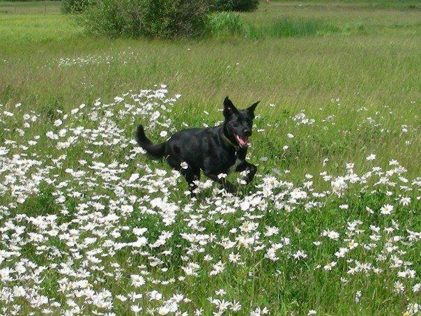 Mannie in daisies