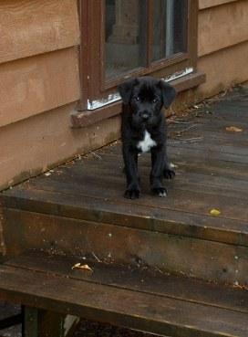 Manny puppy 2003